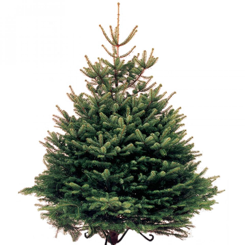 Living Christmas Trees For Sale: Murton Farm Shop